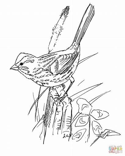Sparrow Coloring Bird Song Outline Pages Birds
