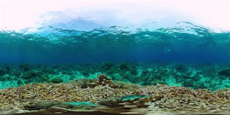 Coral reef and tropical fish underwater 360VR. Panglao, Philippines. 8k Video. 360º Video ...