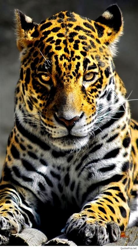 Hd Animal Iphone Wallpapers - best mobile iphone animal wallpapers 2016 2017