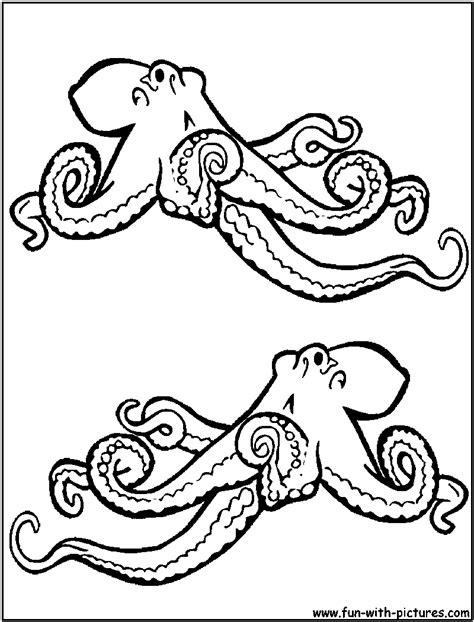 Realistic Octopus Coloring Page | Octopus coloring page