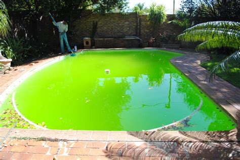 How To Get Rid Of Algae In Swimming Pools-oasis Pool Pros