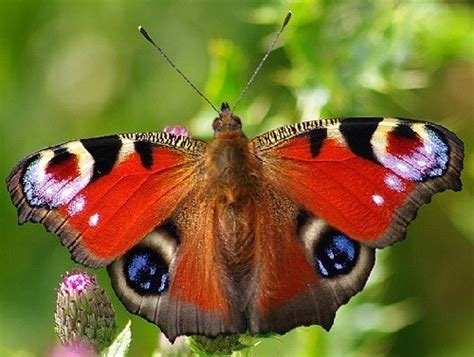 protective eyes  butterfly wings beauty  save