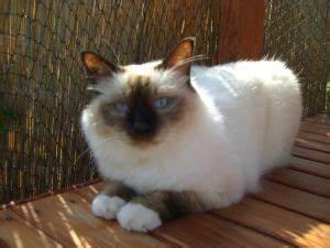 Katzen Garten Vertreiben : katzen vertreiben aus dem garten 5 tipps die helfen ~ Michelbontemps.com Haus und Dekorationen