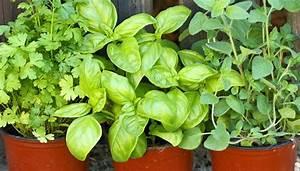 Pflanzen Kübel : pflanzen im k bel ~ Pilothousefishingboats.com Haus und Dekorationen