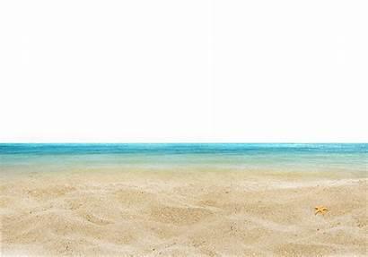 Sea Shore Playa Fish Plage Transparent Mer