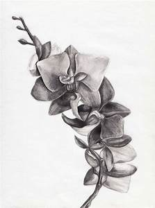 Orchid sketch | color pencil/pencil drawing | Pinterest ...