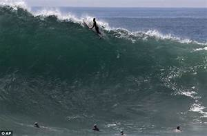 Great White Shark In Surfers Wave Bing Images Sharks