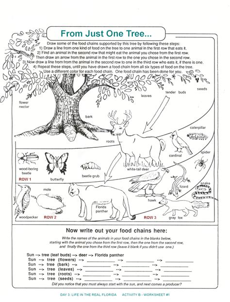 Relationships In A Jungle Ecosystem Worksheet Worksheets For All  Download And Share Worksheets