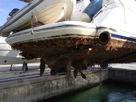 Boat Hull by Hull Fouling Is Highest For Boats That Remain Stationary