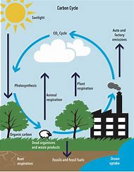 best carbon cycle diagram ideas and images on bing find what you