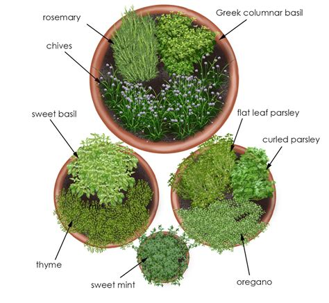 grow fresh herbs to add flavor to soups salads beverages