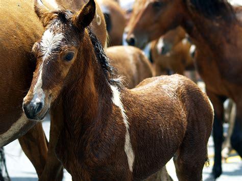 horses pexels herd animals horse ponies brown photographer