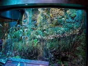 Marine life exhibit debuts at Harvard Museum of Natural ...