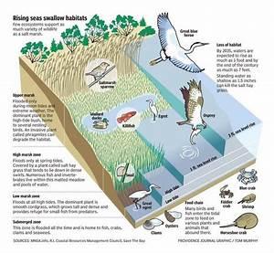 Image Result For Salt Marsh Diagram