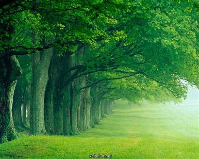 Lush Nature Wallpapers Desktop Photographic Lcd Xcitefun