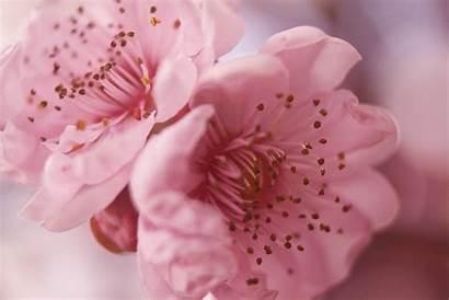 Pretty Wallpapers Flowers Bliss Pixelstalk Wonderful Pink