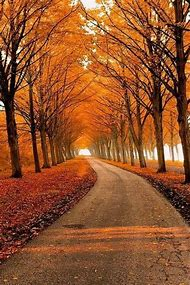 Beautiful Autumn Country Road