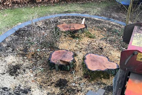 baumstumpf entfernen hamburg stubbenfr 228 sen raum hamburg norderstedt