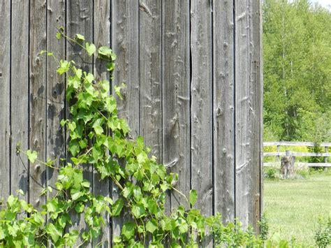 images tree fence board wood vine texture