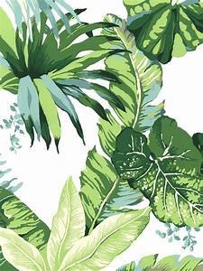 Best leaves wallpaper ideas on tropical
