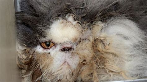 makeover   matted fur   cat   rescued