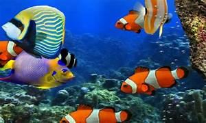 Free Golden Live HD Fish Wallpaper APK Download For ...