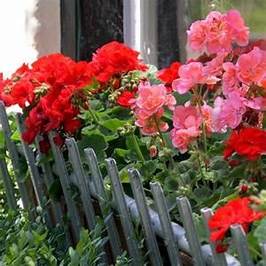 Bac A Fleur Balcon : jardiniere fleurs ~ Teatrodelosmanantiales.com Idées de Décoration