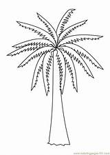 Coloring Palm Tree Pages Popular sketch template