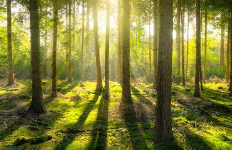 gambar pemandangan pohon alam outdoor gurun cabang cahaya sinar matahari padang rumput