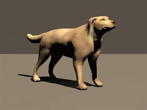 dog  stock photo public domain pictures