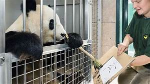 yang yang the panda is painting pictures for a cause