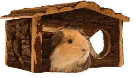 woods  safe  building guinea pig houses