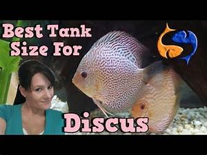 Whats The Best Tank Size For Discus? Talkin Discus ...