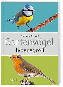Kleine Vögel Im Garten : v gel in unserem garten beobachten h ren und bestimmen ~ Lizthompson.info Haus und Dekorationen