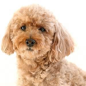 k9 1 on 1 best small dogs for families