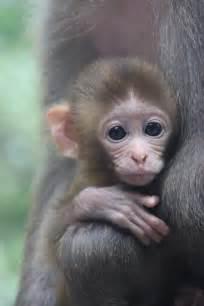 Cute Babies Monkeys