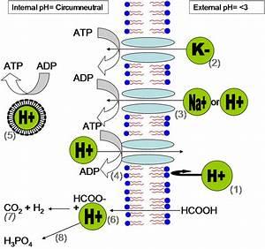 Acidophiles in acid mine drainage - Wikipedia  Ph