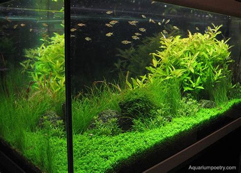 preparation and maintenance of a planted aquarium with a