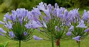 Arbuste Plein Soleil Longue Floraison : mes vivaces inratables longue floraison pour soleil ou ~ Premium-room.com Idées de Décoration