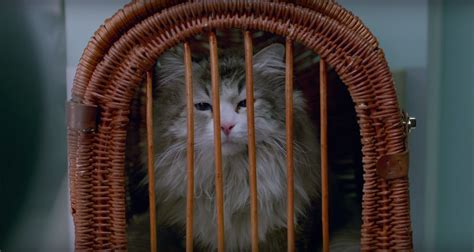 nine lives clip christopher walken is a cat whisperer