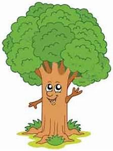 الشجرة الأم نرجس