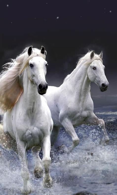 horse horses wallpapers hd phone desktop screen resolution wallpapersin4k