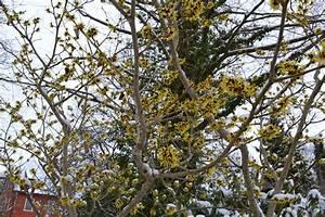 Warten Auf Den Frühling : warten auf den fr hling garten punzmann gmbh menzlhof ~ Watch28wear.com Haus und Dekorationen