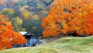 352 best images about go vols on tennessee sweet home and dogwood trees