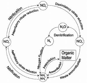 2 The Nitrogen Cycle Showing The Chemical Forms And Key