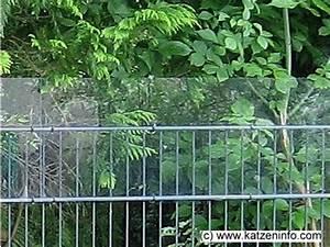 nach oben offene gehege sichern With französischer balkon mit strom im garten ohne stromanschluss