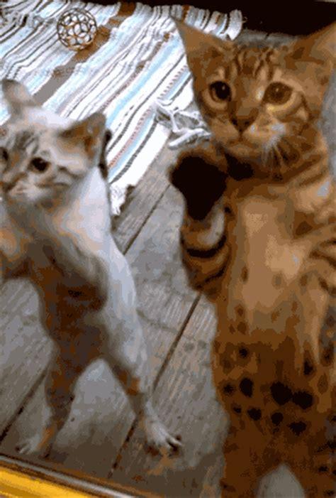 cute cat gifs cuteness overflow