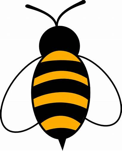 Bee Clip Clipart Bumble Royalty Vector Domain