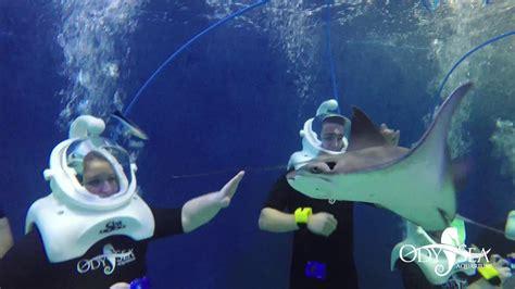 seatrek helmet diving  odysea aquarium youtube