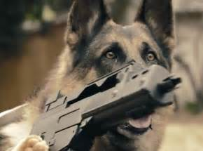Dogs and Cats with Guns
